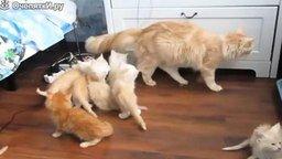 Неудачные прыжки котов смотреть видео прикол - 4:31