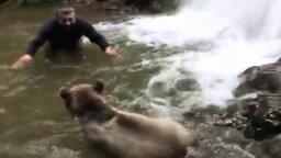 Смотреть Игры с диким медвежонком