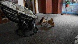 Смотреть Кот и пёс игриво бесятся