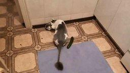 Уникальный кот и огурец смотреть видео прикол - 0:19