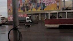 Пёс мешает трамваю смотреть видео прикол - 2:22
