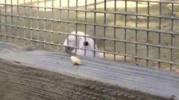 Попугай-инженер смотреть видео прикол - 1:14