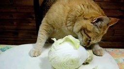 Смотреть Я на диете и я не сдамся!