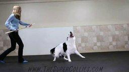 Танец собаки и её хозяйки смотреть видео прикол - 1:56