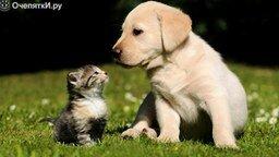 Смотреть Почему кошки конфликтуют с собаками