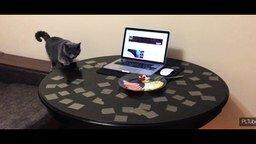 Отучаем кота лазить на стол смотреть видео - 1:00