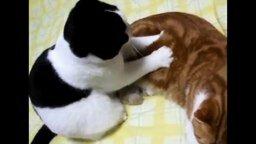 Смотреть Прикольные кошки и белки