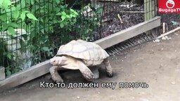 Смотреть Черепаха выручает черепаху