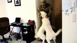 Смотреть Радостные собаки встречают хозяев