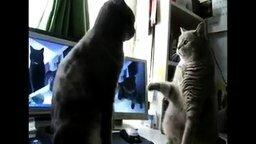 Смотреть Кошки играют в ладушки