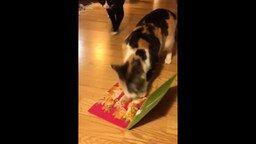 Смотреть Кошка позаботилась о воображаемых котятах