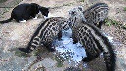 Смотреть Они пить что ли не умеют?