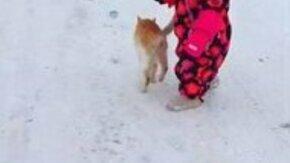 Смотреть Коварное нападение кота сзади