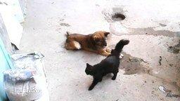 Смотреть Встреча старых друзей: кошка и собака