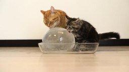 Смотреть Котики и ледышка