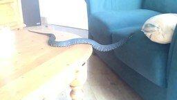 Смотреть Непросто быть змеёй