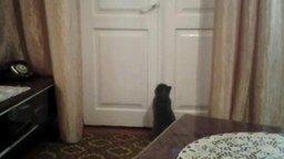 Кот открывает закрытую на ручку дверь смотреть видео - 0:09