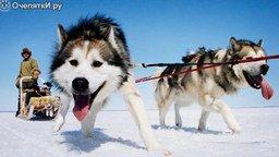 Смотреть Познавательные факты о собаках