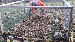 Смотреть Кролик против осенних листьев