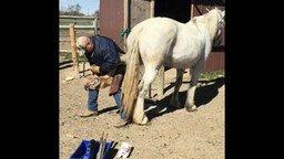 Смотреть Как подковать недоверчивую лошадь
