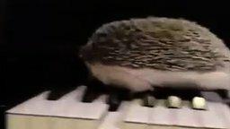 Смотреть Ёжик-джазист на пианино