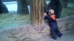 Смотреть Мальчик и детёныш гориллы играют в прятки