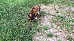 Смотреть Мышка играет с кошкой