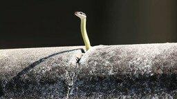 Смотреть Змейка вовремя прячется