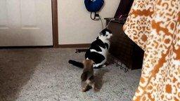Забавный щенок и жирный кот смотреть видео прикол - 0:24