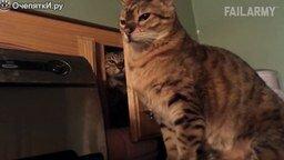 Смешные провалы животных - 2015 смотреть видео прикол - 7:11