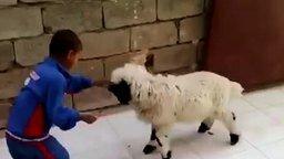 Смотреть Мальчик против барашка