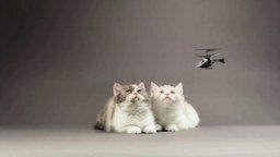 Котята против вертолётиков смотреть видео прикол - 0:37