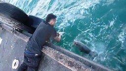Смотреть Поймал рыбу без удочки и спиннига