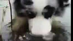 Смотреть Собака пускает бульбышки в воде