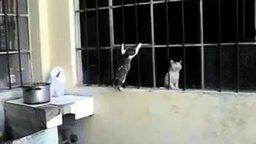 Смотреть Котёнок пробивается к мамке