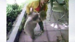 Смотреть Мальчик борется с медвежонком
