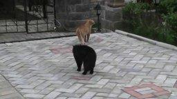 Смотреть Коты дерутся под киноозвучку