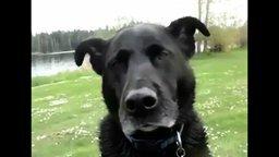 Собака стучит зубами от холода смотреть видео прикол - 0:21