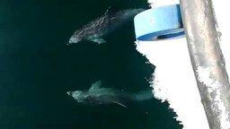Как дельфины танцуют смотреть видео прикол - 0:37