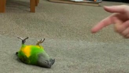 Смотреть Попугай пародирует свою смерть