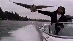 Птица присела на лодку отдохнуть смотреть видео прикол - 0:31