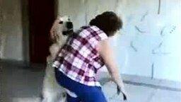 Смотреть Озабоченная собака