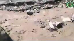 Спасли собаку из бурной реки смотреть видео - 1:45