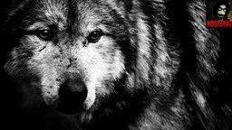 Смотреть Стих Душа волка
