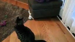 Смотреть Шустрый котёнок-ниндзя