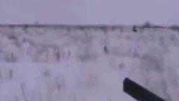 Беззащитный и наивный заяц смотреть видео прикол - 0:24
