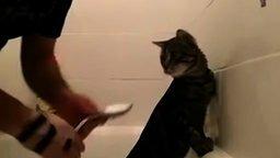 Смотреть Водные процедуры для терпеливого кота