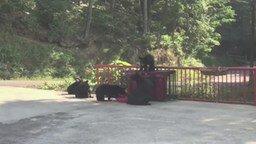 Смотреть Попытка напугать медведицу
