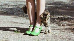 Смотреть Познавательные факты о кошках