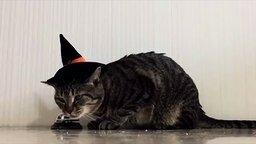 Смотреть Кот дрессирует хозяина